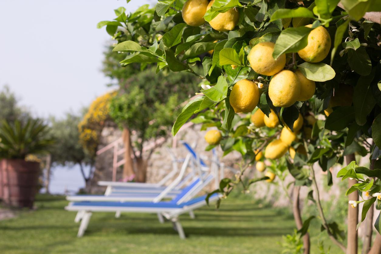 Taste of Rome & Amalfi Coast